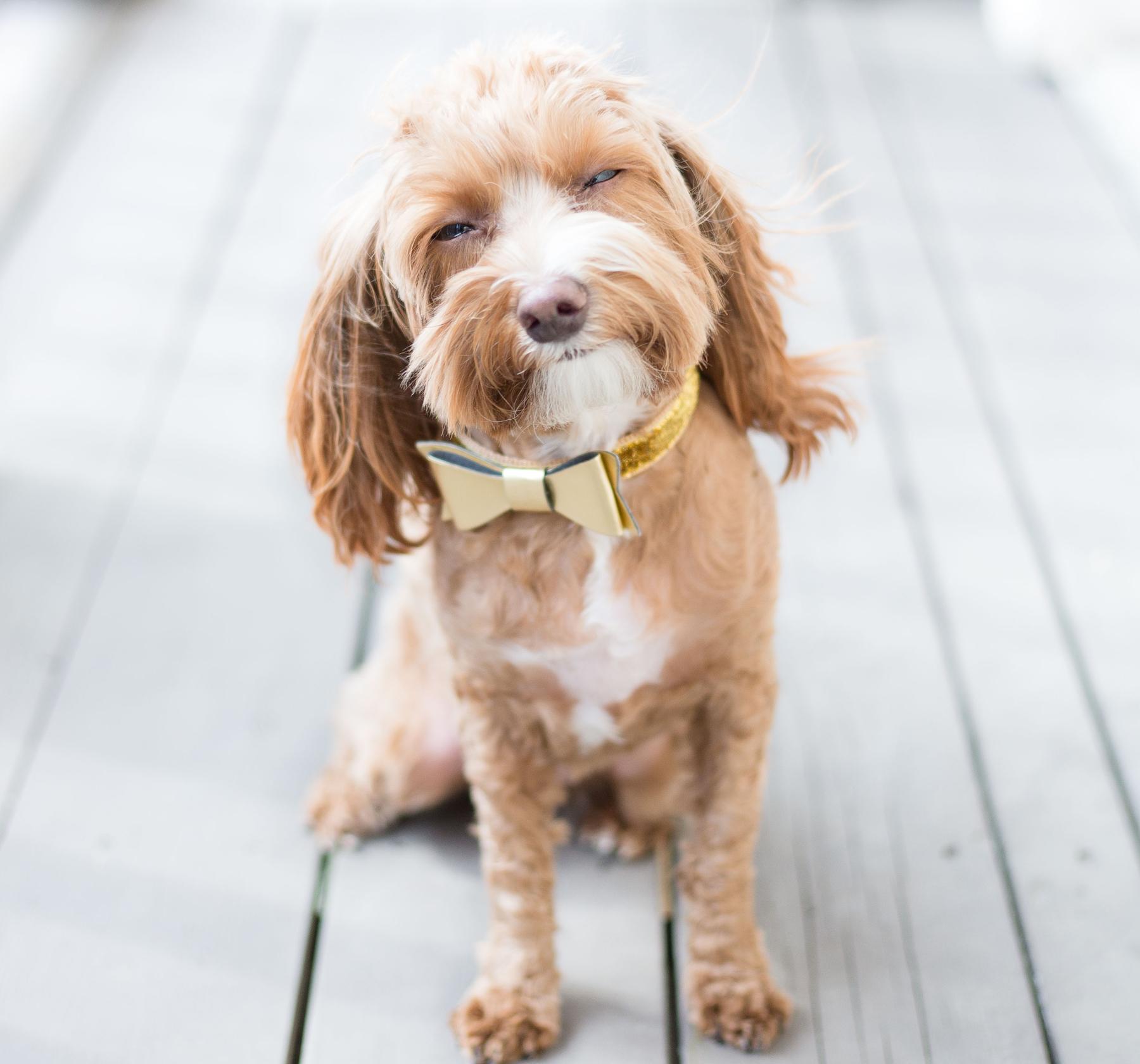 うちの犬のことをもっと知りたい!写真から伝わる犬の気持ちとは?